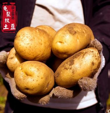 百姓灵芝~新鲜香甜小土豆9斤