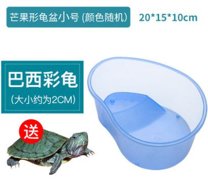 【送活乌龟】乌龟水陆缸养龟盆带晒台