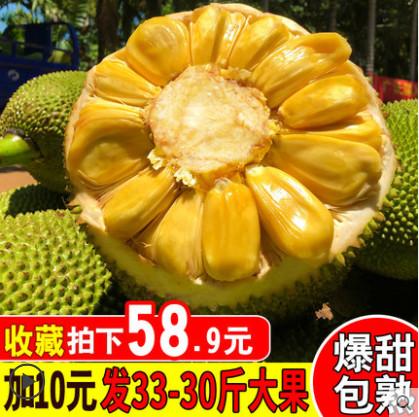 群友到货!【六井旗舰店】海南菠萝蜜 现摘现发19-15斤