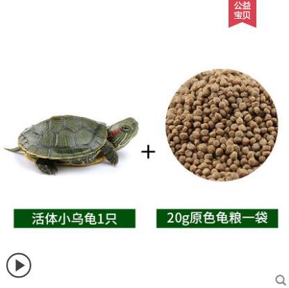 【送1只乌龟】50天龟粮20g装