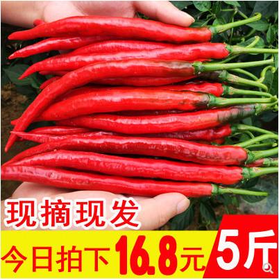 群友好评!贵州红辣椒 二荆条青椒红海椒5斤