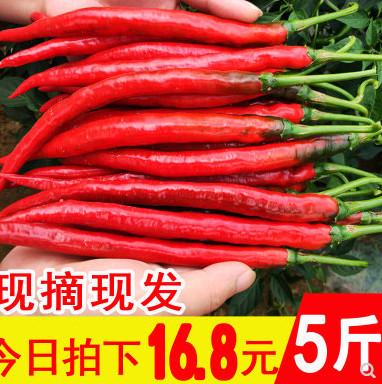 群友到货!贵州红辣椒新鲜蔬菜5斤