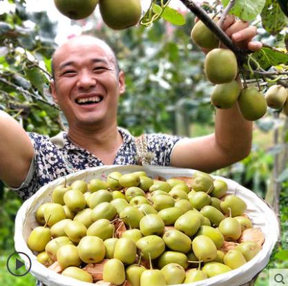 【虹果滋生鲜旗舰店】新鲜现摘四川红心猕猴桃-拍5份6个果,实际收到一份