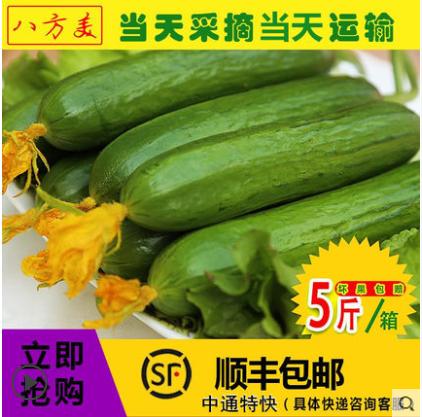 【八方美】【5斤】新鲜水果黄瓜现摘现发